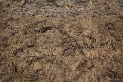 Natural fertilizer, cow dung in field. Heap of cow dung  ready to use in field in closeup Royalty Free Stock Image