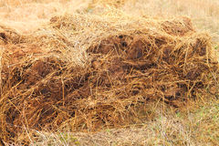 Heap of cow manure Stock Image