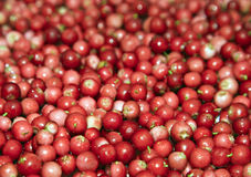 Heap of cowberry Royalty Free Stock Photos