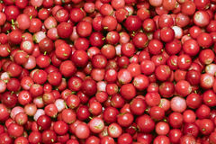 Heap of cowberry Royalty Free Stock Images