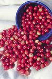 Heap of cranberry. Stock Photos