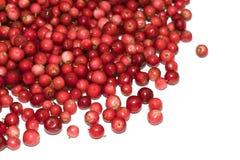Heap of cranberry Royalty Free Stock Photos