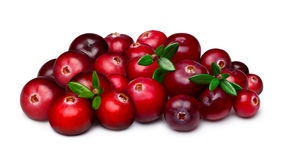 Heap of cranberry Stock Images