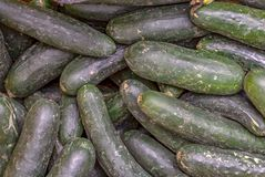 A heap of green cucumbers royalty free stock photo