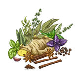 Heap of culinary herbs and spices, full color Stock Image