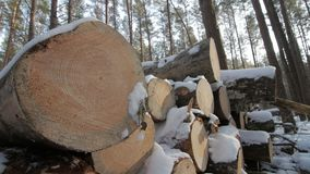 Heap of cutted trees along the road covered in white snow on winter cloudy day. Heap of cutted trees along the road in forest covered in white snow on winter stock video footage