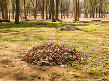 Heap of dead leaf. Taken from Muang Sing Historical Park Stock Photo