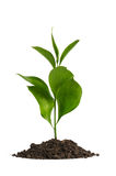 Heap dirt with a green plant royalty free stock photo