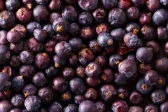 Heap of dried elderberries Stock Images