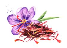 Heap of dried saffron spice with a flower. Watercolor hand drawn illustration,  isolated on white background.  stock illustration