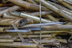A heap of dry canes used as a building material royalty free stock photo