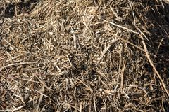 Heap of dry garbage, grass in spring Royalty Free Stock Photography
