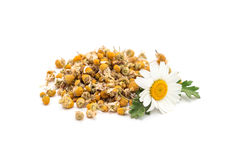 Heap of dry herbal chamomile tea with fresh chamomile flowers isolated on white. Background royalty free stock photography
