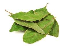 Heap of dry laurel (bay) leaves Stock Image