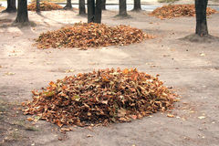 Heap of dry leaves in autumn time Stock Images
