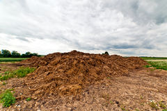 Heap of dung. Agricultural land with a large heap of brown dung (cow dirt) used as a fertilizer, beyond which are fields of corn and woodland, pale gray cloudy Stock Image