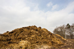 Heap of dung Stock Photo