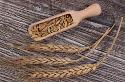 Heap and ears of rye grain on wooden background Royalty Free Stock Photo