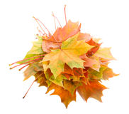 Heap of fall maple leaves Stock Photography