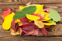 Heap of fallen autumn leaves red yellow and green color. On old worn rustic brown wooden table stock image