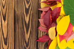 Heap of fallen autumn leaves red yellow and green color on old worn rustic brown wooden table. With copy space stock photos