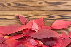 Heap of fallen autumn red leaves. On old worn rustic brown wooden table with copy space stock photos
