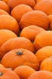 Heap of farm pumpkins Stock Photography