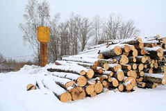 Heap firewood Stock Image