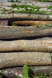 Heap of firewood logs Stock Image