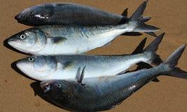 Heap of fish Stock Photo