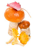 Heap of forest mushrooms Stock Images