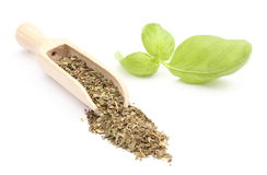 Heap of Fresh basil on wooden spoon and green leaves. White background Royalty Free Stock Photos
