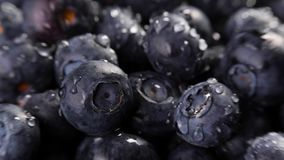 Heap of blueberries. Heap of fresh blueberries under the rain. Timelapse closeup macro shot. Fresh berry series stock video footage