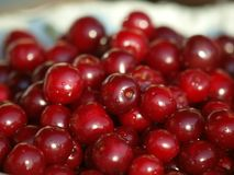 Heap of Fresh Cherry Fruits Royalty Free Stock Image