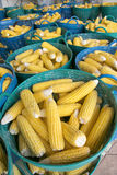 Heap of fresh corns in baskets Royalty Free Stock Photos