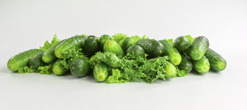 Heap of fresh cucumbers with lettuce Stock Images
