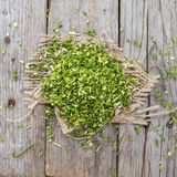 Heap of fresh cutted Chives Stock Photos
