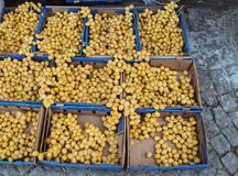 Heap of dry dates at a market place royalty free stock photography