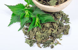 Heap of fresh and dry nettle. Stock Photo