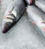 Heap fresh fish Stock Photos