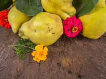 Heap of fresh harvested ripe quinces. Heap of fresh harvested ripe yellow quinces Stock Image