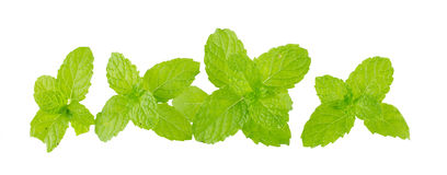 Heap of fresh kitchen mint leaves Royalty Free Stock Photo