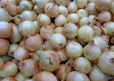 Heap of of Fresh Onions at the Local Market Royalty Free Stock Photography