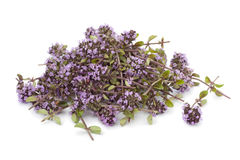 Heap of fresh oregano thyme flowers Stock Image