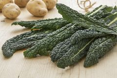 Heap of fresh picked cavolo nero leaves Stock Images