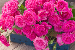 Heap  of fresh pink roses close up Stock Photos