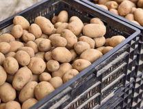 Heap of fresh potatoes on a weekly market Stock Image