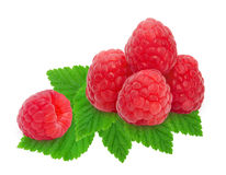 Heap of fresh raspberries. Heap of fresh ripe raspberry berries with leaves isolated on white background. Design element for product label, catalog print, web Royalty Free Stock Photos