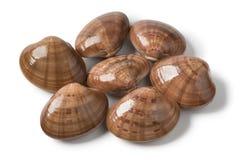 Heap fresh raw closed smooth clams. Heap of fresh raw closed smooth clams on white background Stock Photo