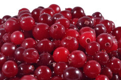 Heap of fresh red cranberries. On a white background Stock Image